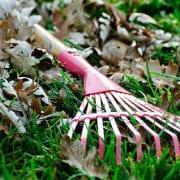 Image: Raking leaves
